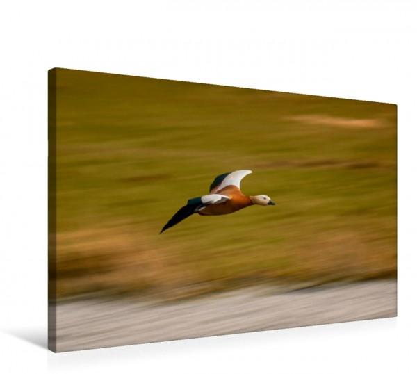 Wandbild Ente