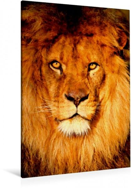 Wandbild Löwenportrait Löwe Löwe
