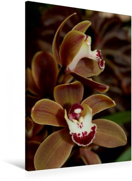 Wandbild Orchidee braun