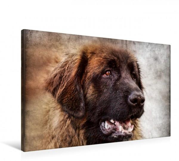 Wandbild Leonberger Hunde und Haustiere Hunde und Haustiere