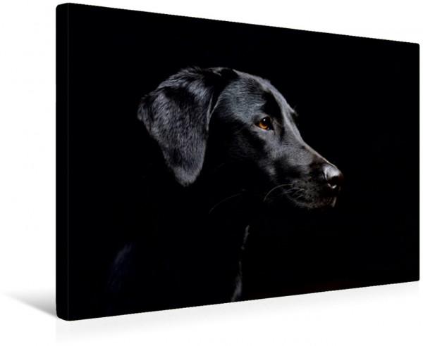 Wandbild schwarzer Labrador