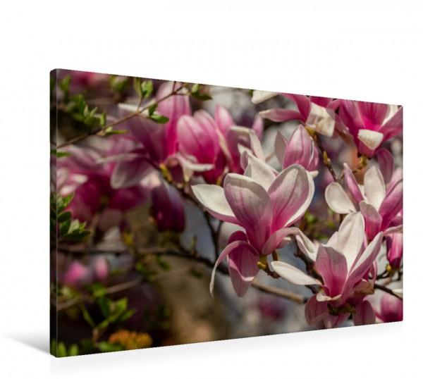 Wandbild Magnolien