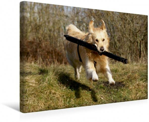 Wandbild Golden Retriever Power Hunde in Aktion Hunde in Aktion