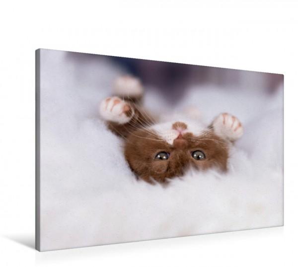 Wandbild Kuschelkatze - niedliches Katzenbaby