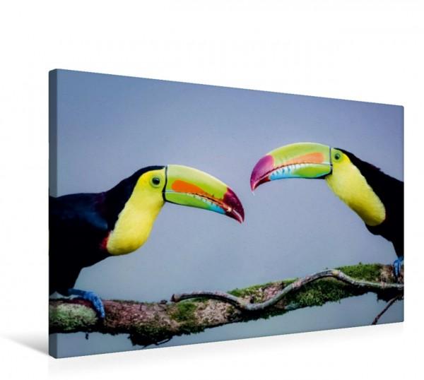 Wandbild Regenbogentukan Costa Rica tierisch gut Costa Rica tierisch gut