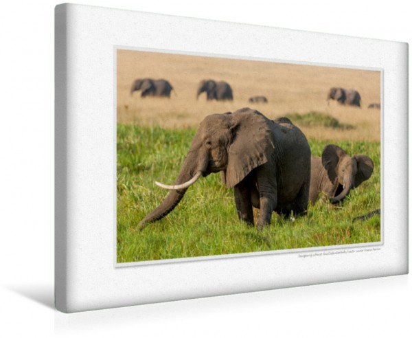 Wandbild Emotionale Momente: Aus dem Leben der Elefanten. CH-Version