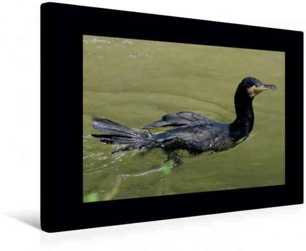 Wandbild Kormoran Wasservögel und Vögel Wasservögel und Vögel
