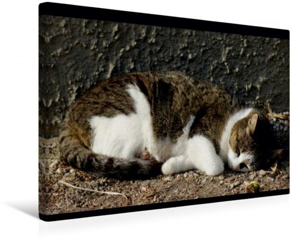 Wandbild Schlafende Hauskatze Katzen und Haustiere Katzen und Haustiere