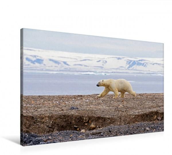 Wandbild Polarbär auf Wanderschaft