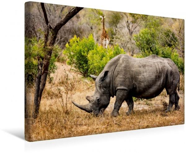 Wandbild Nashorn und Giraffe