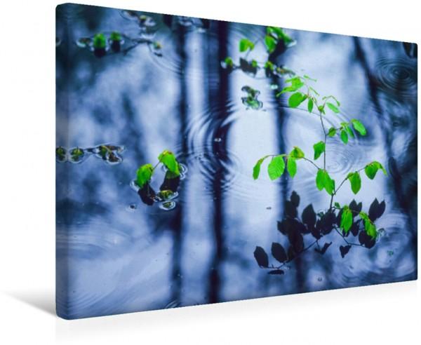 Wandbild Junge Buche im Wasser, Mecklenburg-Vorpommern, Deutschland Ein poetisches Foto von Wasser Bäumen Durchhaltevermögen Lebensfreude und Frische Ein poetisches Foto von Wasser Bäumen Durchhalteve