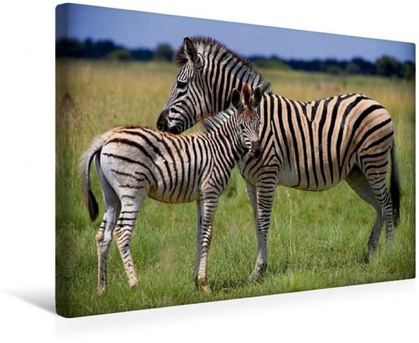 Wandbild Zebras Mutter mit Fohlen Mutter mit Fohlen