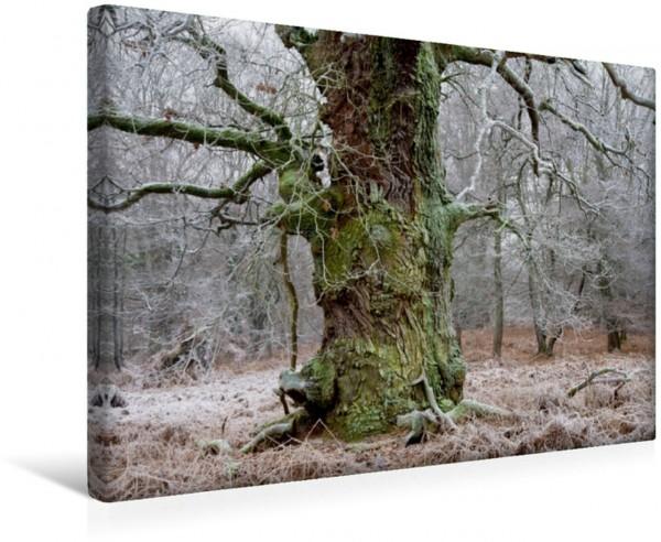 Wandbild Eiche Alte Eiche im Märchenwald Alte Eiche im Märchenwald