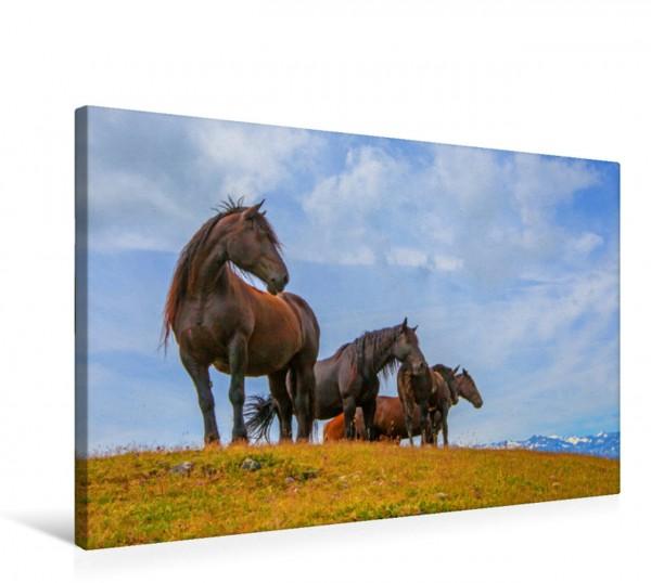 Wandbild Neugierige Norikerpferde auf der Murnauerscharte