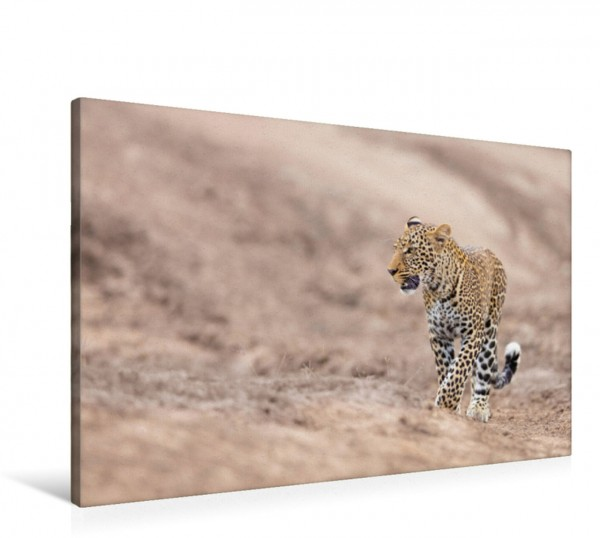 Wandbild Leopard in trockenem Bachbett Masai Mara Kenia Masai Mara Kenia