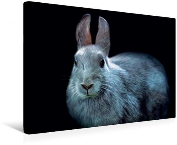 Wandbild Kaninchen Ruhend Ruhend