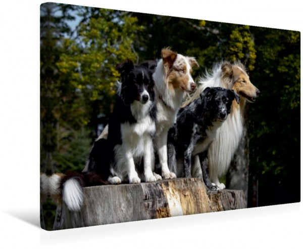 Wandbild Bordercollie, Australian Shepherd , Mischling, Collie 4 Hunde auf deinem Baumstumpf 4 Hunde auf deinem Baumstumpf