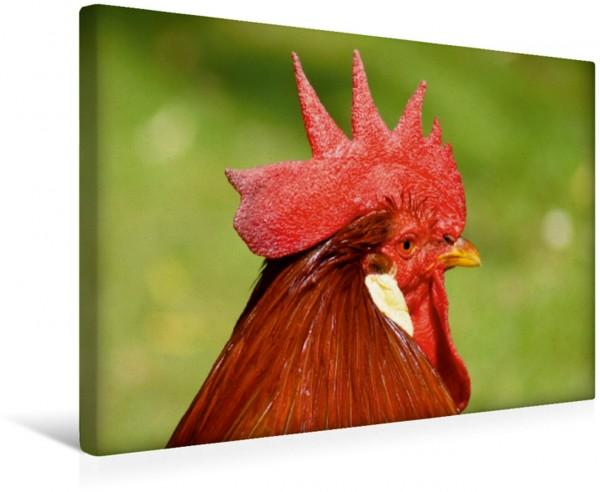 Wandbild Hahnen Haupt Hühner und Haustiere Hühner und Haustiere