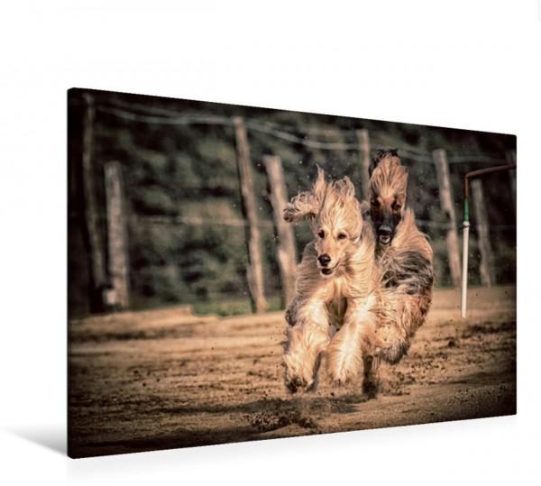 Wandbild Hunderennen - dicht auf den Pfoten