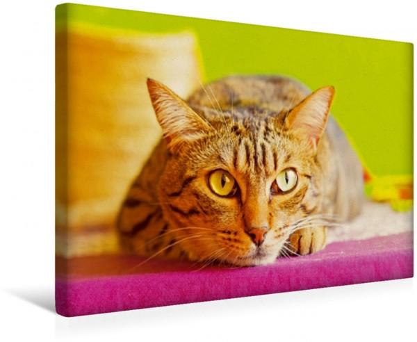 Wandbild Gestreifte Katze auf dem Sprung Katzen: unsere liebsten Hausgenossen Katzen: unsere liebsten Hausgenossen