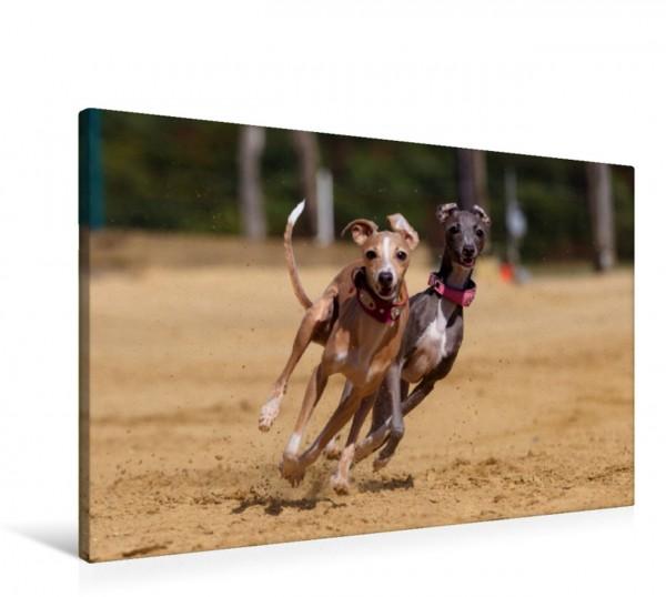 Wandbild Hunderennen - ab durch die Mitte