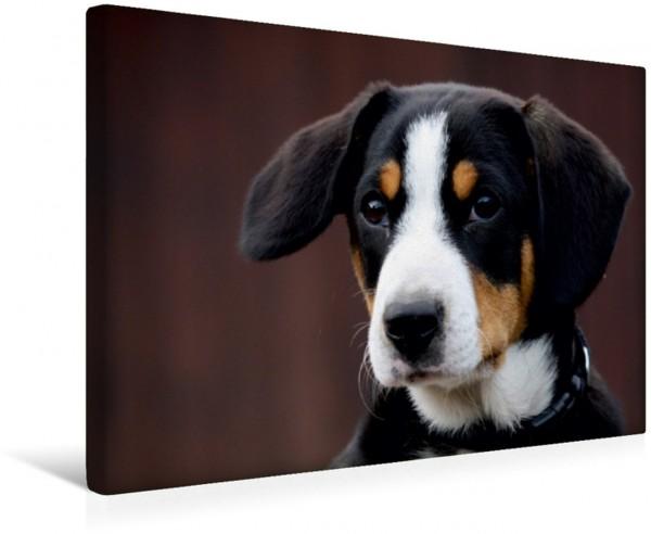 Wandbild Sennenhunde Entlebucherr begleiten Sie durch das Jahr Emma