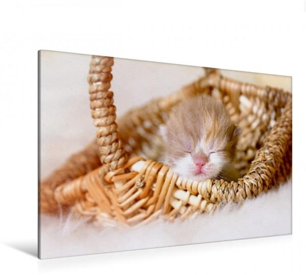 Wandbild Zauberhaftes Britisch Kurzhaar Katzenbaby