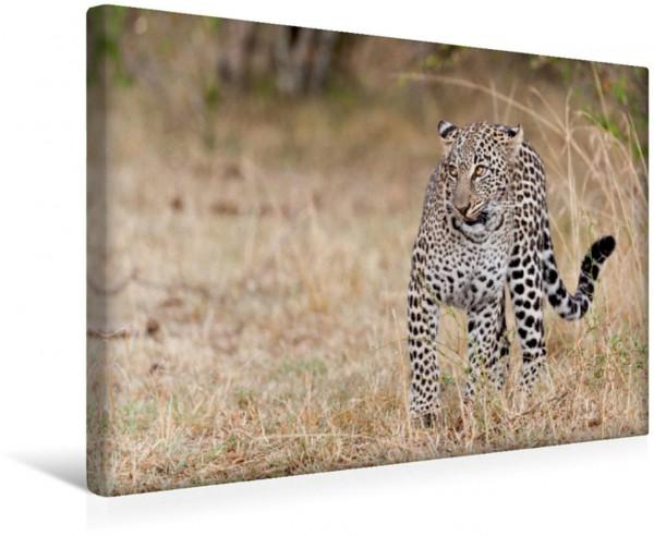 Wandbild Emotionale Momente: Leoparden