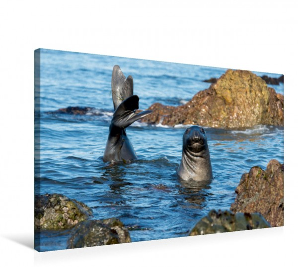 Wandbild Begrüßung eines jungen See-Elefantens See-Elefanten See-Elefanten