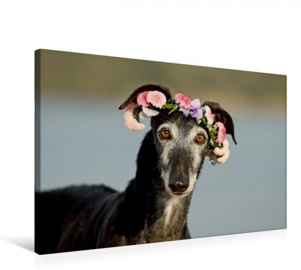 Wandbild Sima....ein Windhundemädchen ....mit Sonntagsblümchen ....mit Sonntagsblümchen