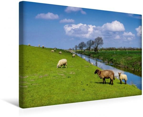 Wandbild Deichschafe Ostfriesland - zwischen Watt und Moor Ostfriesland - zwischen Watt und Moor
