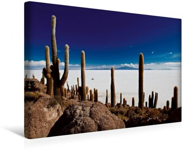 Wandbild Riesen-Kakteen auf einer Insel im größtem Salzsee der Erde, dem Salar de Uyuni Uralte Riesen-Kakteen Trichocereus pasacana auf der Inkahuasi Island oft falsch auch Isla del Pescado genannt is