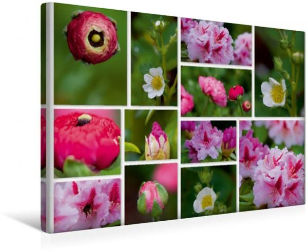 Wandbild Blütenpracht im Garten Collage mit wunderschönen Gartenblumen Collage mit wunderschönen Gartenblumen