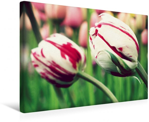 Wandbild Tulpen - Deutsche Version Niederländische Blumen Niederländische Blumen