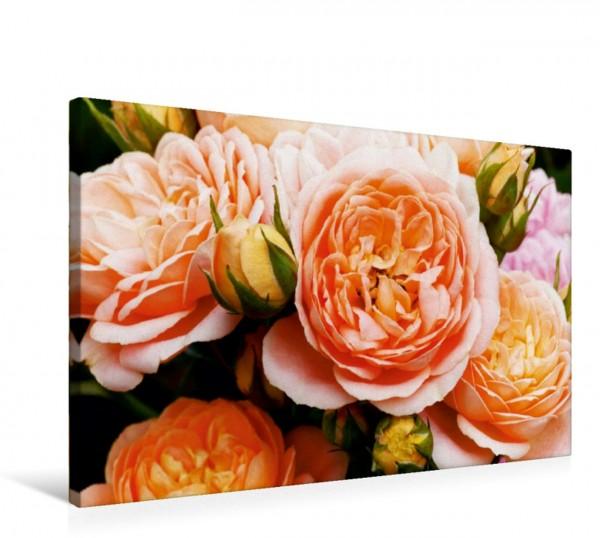 Wandbild Rosen in Apricot Rosen in Apricot Rosen in Apricot
