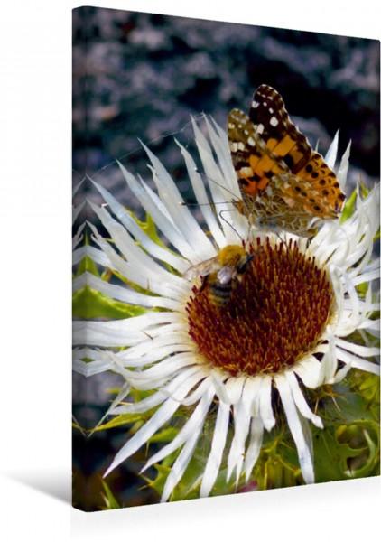 Wandbild Schmetterlilnge und Blumen