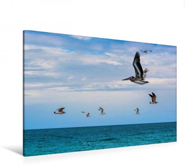 Wandbild Vogelflug über dem Meer Pelikan Möwen und türkisblaues Wasser Pelikan Möwen und türkisblaues Wasser