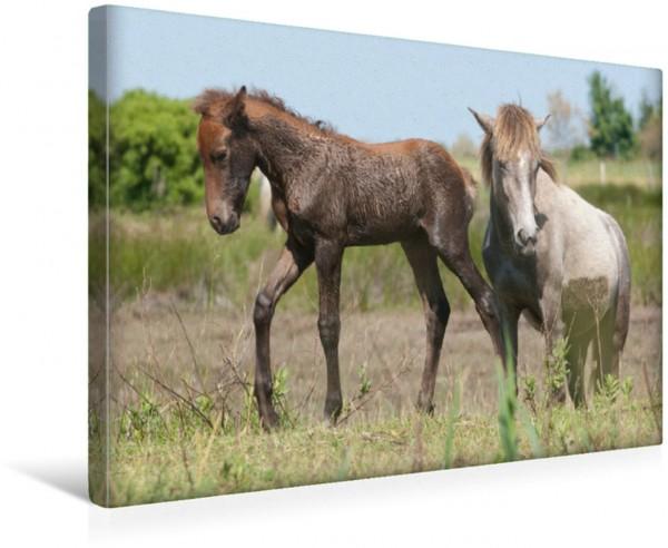 Wandbild Junge Camargue-Pferde im Sumpfgebiet Camargue-Pferde Camargue-Pferde