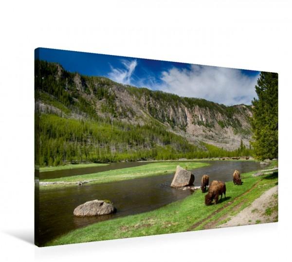 Wandbild Yellowstone River