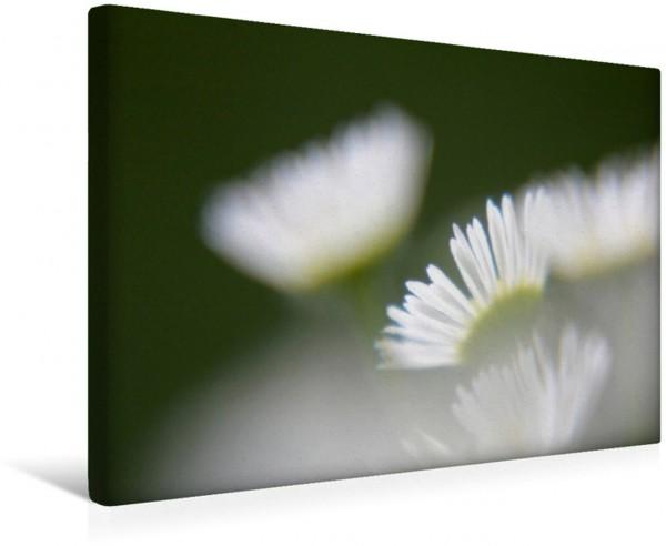 Wandbild Das sprechende Gänseblümchen Lassen Sie die Blumen zu sich sprechen Lassen Sie die Blumen zu sich sprechen