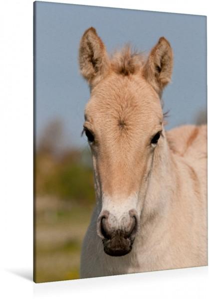 Wandbild Henson Pferd Fohlen Fohlen Fohlen