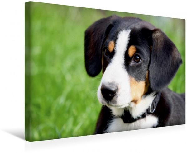 Wandbild Sennenhund Entlebucher Sennenhund Welpe Leinwandbild