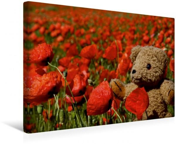 Wandbild Teddy KramBam im Mohnfeld