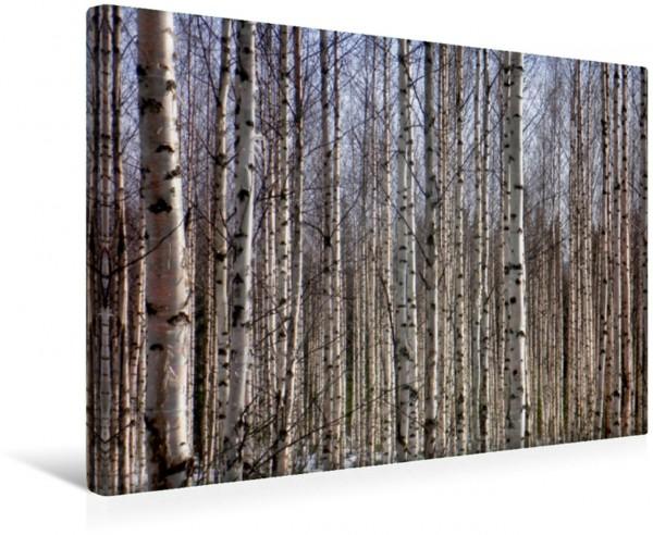 Wandbild Finnland Birkenwald