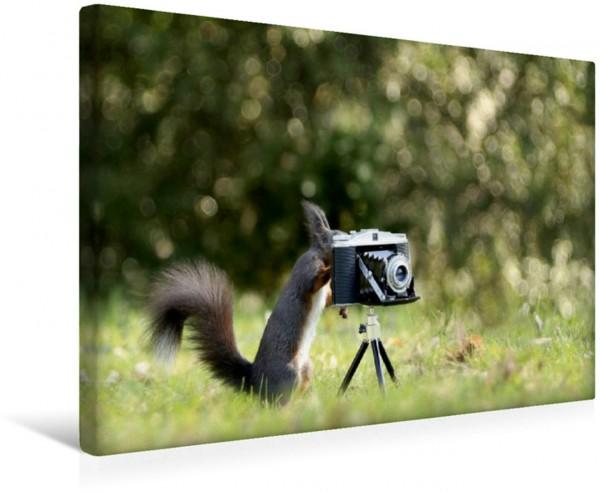 Wandbild Eichhörnchen entdeckt die Liebe zur Fotografie.