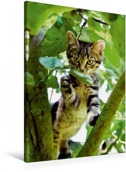 Wandbild Niedliches Katzenkind klettert im Baum Ein neugieriges graugetigertes Kätzchen Europäisch Kurzhaar spielt im Garten und klettert in einen Baum Ein neugieriges graugetigertes Kätzchen Europäis