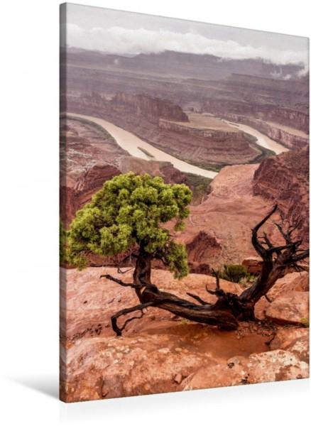 Wandbild Dead Horse Point State Park - Utah, USA