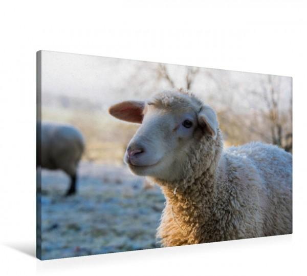 Wandbild Schafe - Wolle ohne Ende