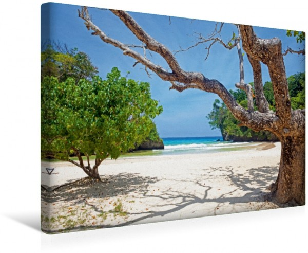 Wandbild Strand alter Baum Traumstrand Port Antonio Leinwandbild