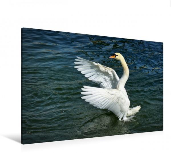 Wandbild Schwanen Tanz Wasservögel und Vögel Wasservögel und Vögel